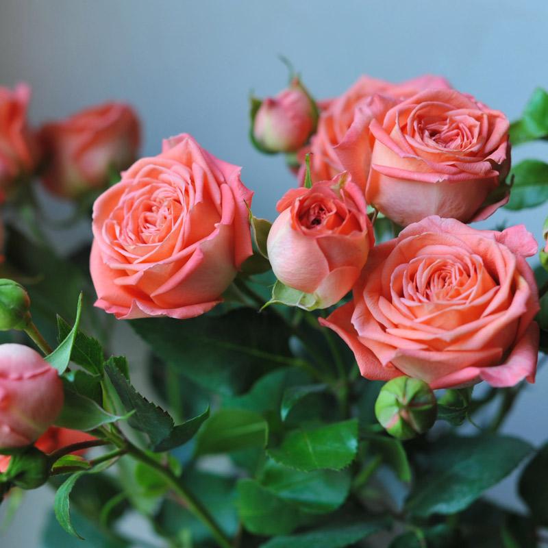 Розы 170 см купить уфа